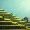【自宅で精米】簡単!米の栄養たっぷり!【美容・健康・節約】術